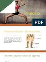 Anatomía inferior