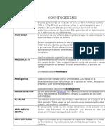 Odontogenesis glosario terminos