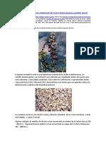 Propiedades Nutricional y Medicinales Del Tarwi