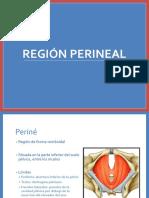 Region Perineal
