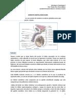 Sistema Reproductor Masculino,  generalidades