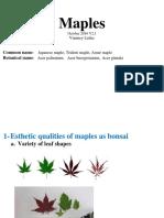 maples-common-name-japanese-maple-trident-maple-amur-maple-botanical-name-acer-palmatum-acer-buergerianum-acer-ginnala.pdf