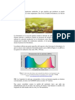 fotosintesis y fermentacion nahi.docx