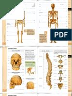 Atlas - Sistema óseo (color) (1).pdf