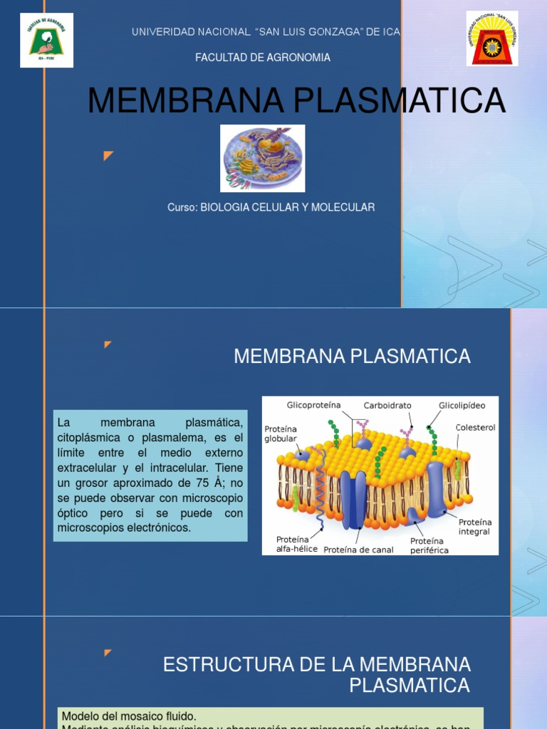 Membrana Plasmatica Semana 3 Pptx Bicapa Lipídica