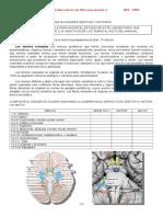 Lab 9 Microanatomía.docx