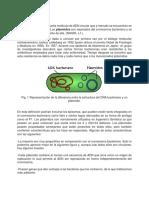 P5-Plasmidos