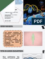 Estructura de Acidos Nucleicos