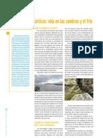 Diatomeas antárticas