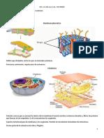 Neuropatologia clase 1.docx