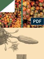 Savia-Pacifico.pdf