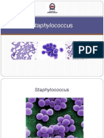 Staphylococcus (C8)