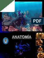 A. TOPOGRAFICA CLASE 2 PDF.pdf
