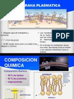 bloque_2_membranaplasmatica