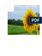 bunga matahari 5.doc
