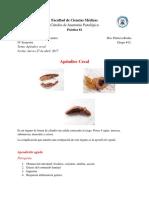 AP- 2 - Apéndice Cecal