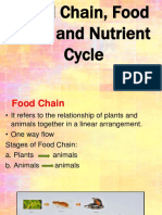 Food Chain Web and Nutrient Cycle Eco