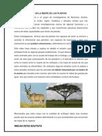 EN LA MENTE DE LAS PLANTAS.docx
