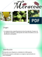 69184012 Familia Moraceae