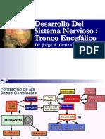 Tronco encefálico.pdf