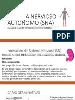 Sistema Nervioso Periférico Autónomo