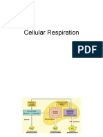 cellularrespiration-100421143132-phpapp02