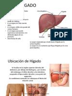 EXPOSICIÓN GLANDULAS ANEXAS DEF.pptx
