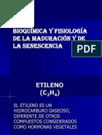 Bioquimica y Fisiologia de La Maduracion
