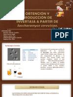Saccharomyse Cerevisiae 1 c
