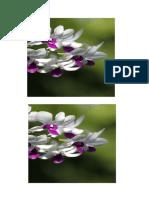bunga anggrek 3