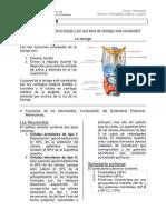 Cuestionario n9 Histología