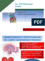 Cardio Embrio_clase (1)