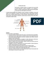 Sistema Muscular y Cuidados Shumaher