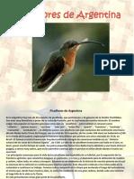 Picaflores de Argentina
