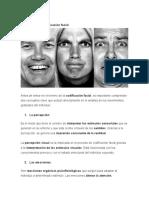 Percepción La Codificación Facial