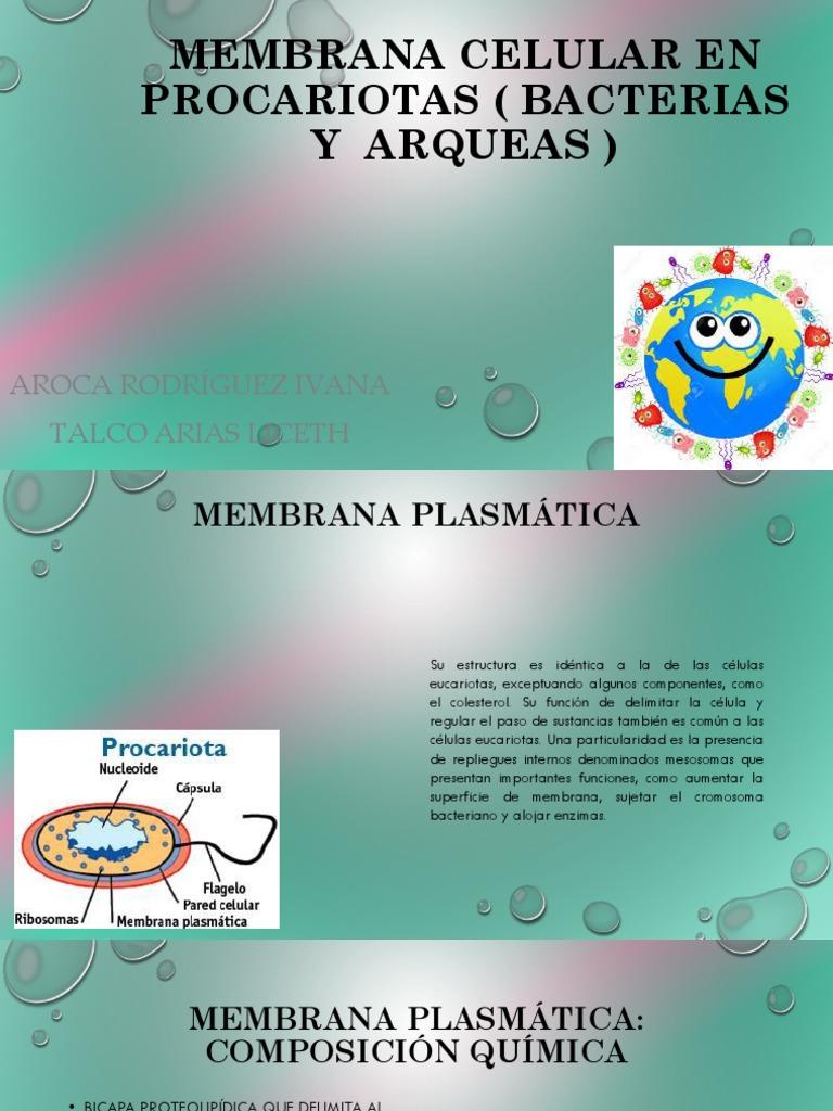 Membrana Celular En Procariotas Bacterias Y Arqueas