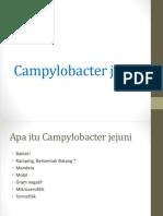 Cam. jejuni KEL.4.pptx