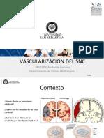 Clase 33 Vascularización Del SNC_DBIO1050
