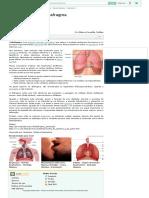 Diafragma - Músculo - Anatomia Humana