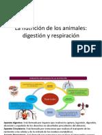 Tema Digestion Animal