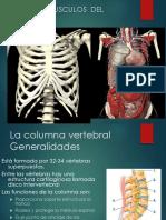 Huesos Y Musculos Del Tronco