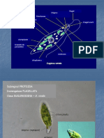 01 Protozoa 1