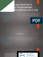 Análisis Funcional de La Proteína Phosphatidate Citydylytransferase De