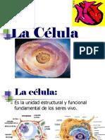 La Célula.ppt