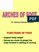 Arches of Foot