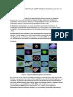 Identificación de Diatomeas.docx