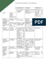 Principales Glándulas Endocrinas y Sus Hormonas