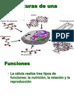 Estructuras de Una Celula