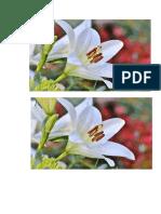 bunga anggrek 5