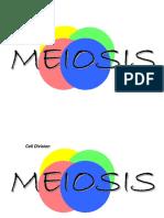 meiosis 1